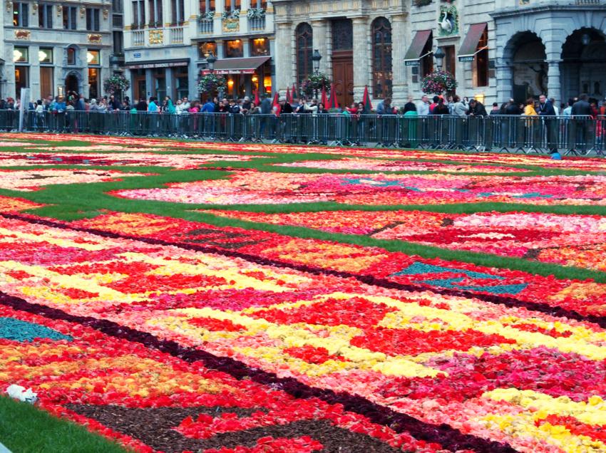 Flower Carpet, Brussels - S Marks The Spots Blog